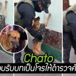 สุนัขจรจัดถูกรับเลี้ยงโดยตำรวจ มันจึงสวมบทเป็นผู้ร้าย เพื่อช่วยตำรวจฝึกค้นตัว