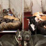 สุนัข 5-6 ตัวต้องอยู่ในกรงเดียวกัน สะท้อนปัญหาสัตว์ถูกทิ้งที่มีจำนวนเพิ่มมากขึ้น!!