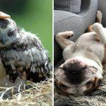 24 ภาพสัตว์โลกที่ยอมเปิดใจให้เพื่อนต่างสายพันธุ์ ต่างที่มา ทำให้โลกน่าอยู่มากขึ้น