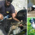 ิสุนัขแก่-ตาบอด ถูกมัดและถูกนำไปถ่วงน้ำ โชคดีมีคนผ่านมาเห็นและช่วยไว้ได้ทัน