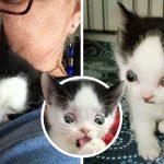หญิงรับเลี้ยงลูกแมวที่มีภาวะปกติ เพื่อให้โอกาสมันได้พิสูจน์ตัวเองว่าไม่ได้แตกต่าง