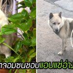 หมาจอมซนชอบออกมาแช่อ่างบัว เป็นเหตุให้คนซอยเดียวกัน ได้มาเจอกันในทวิตเตอร์