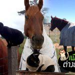 เรื่องราวของเพื่อนรักต่างสายพันธุ์ 'ม้า vs แมว' ที่ร่วมสร้างมิตรภาพดีๆ ด้วยกันมา 6 ปีแล้ว