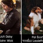 รวม 14 สัตว์นักแสดง ที่แสดงหนังได้ยอดเยี่ยมมาก ไม่มีน้อยหน้ามนุษย์คนดังเลย