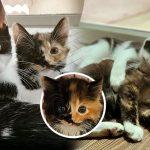 หญิงสาวไปรับลูกแมวมาเลี้ยง แต่เกิดตกหลุมรักคู่หูของมันด้วย เหมากลับบ้าน 2 ตัวเลย