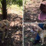 หมาถูกทิ้งและผูกติดไว้กับต้นไม้ ยิ้มหวานกว้างๆ รอให้คนมาช่วยอย่างใจเย็น