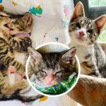 คู่รักรู้ว่า 'ลูกแมวตาบอด' มีพี่ชายเป็นผู้นำทาง พวกเขาจึงตัดสินใจรับเลี้ยงทั้งสองตัว