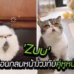 พบกับ 'Zuu' ก้อนกลมหน้าง่วงพร้อมคู่หูหน้ามึน ไม่ได้ขายขำ แต่คนฮากระจาย
