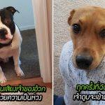 20 น้องหมาแสนดีผู้น่ารักที่น่าเกาพุงให้มากที่สุด แม้พวกมันจะไม่ได้ร้องขอก็ตาม