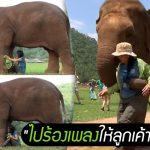 'ฟ้าใหม่' ช้างไทยแสนรู้ พาผู้ดูแลคนโปรดไปร้องเพลงกล่อม 'ลูกช้าง' ที่เพิ่งเข้ามาใหม่