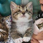 'ลูกแมวตาเกือบบอด' สูญเสียพี่ชายที่รัก แต่มันยืนยันจะสู้ต่อไป เพื่อมีชีวิตที่ดีกว่า