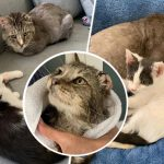 แมวจรรุ่นใหญ่ผ่านชีวิตลำบากมา มีความสุขมากเมื่อถูกรายล้อมด้วยคน…และแมวน้อย
