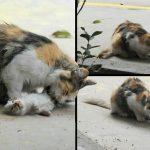 สุดสะเทือนใจ!! แม่แมวนั่งเลีย 'ศพ' ลูกน้อยแรกเกิด หลังพวกมันถูกฆ่าอย่างโหดเหี้ยม