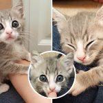 'ลูกแมวจร' ได้รับการช่วยเหลือ กลายเป็นเจ้าก้อนขนปุยที่ชอบนอนบนตักทุกคนที่เจอ