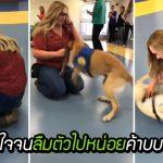 หมาบริการลืมตัว แสดงอาการดีใจจนลิงโลด เมื่อพบครูฝึกคนโปรดที่ฝึกมันมาตั้งแต่เล็ก
