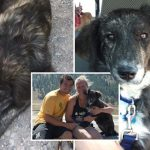 คู่รักพบ 'สุนัขจรจัด' ขณะแวะปั๊ม จึงรับมาเป็นเพื่อนร่วมทริป และลงเอยด้วยการรับเลี้ยงมัน