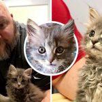 คู่รักแค่จะมาดูลูกแมวที่ถูกโยนออกจากรถ แต่ถูกมันอ้อนด้วยดวงตากลมโต เลยต้องรับเลี้ยง