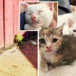ลูกแมวโผล่หัวออกมาจากรูรั้ว ทำให้มันกับพี่น้องได้รับการช่วยเหลือ และมีชีวิตที่ดีขึ้น