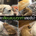 เจ้าแมวชอบเลียนแบบหมา เห็นพี่หมานอนท่าไหน ก็นอนตามท่าเดียวกันเป๊ะๆ