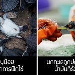 20 ภาพธรรมชาติสุดสะเทือนใจที่สะท้อนให้เห็นว่า 'สัตว์' ต้องการความช่วยเหลือจากเรา
