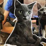'ลูกแมวเขี้ยวยาว' เกิดมาผิดปกติ ได้พบกับครอบครัวใจดีอย่างที่มันต้องการ