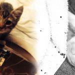 Ed Sheeran โพสต์บอกลาแมวน้อยสุดรัก Graham ตอนนี้มันไปอยู่บนสวรรค์แมวแล้ว