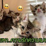 'แมวจร' พาลูกๆ ไปหาหญิงใจดีที่เคยให้อาหารมัน เพื่อให้ช่วยลูกของมันจากความหิวโหย