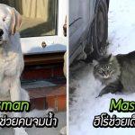 มาดู 10 เรื่องราวของสัตว์เลี้ยงคนเก่ง ผู้เคยช่วยให้มนุษย์พ้นจากภัยอันตรายมาแล้ว