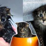 ลูกแมวจรจัดตัวเล็กเกินพอดี อ่อนแอจนน่าห่วง ได้โอกาสใช้ชีวิตต่อจากมนุษย์