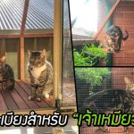 ทาสเอาใจเจ้านายผู้รักชีวิตนอกบ้าน ด้วยการทำระเบียงพิเศษสำหรับแมวโดยเฉพาะ