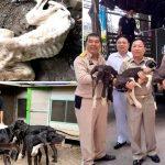 หมาเกรทเดน 13 ชีวิตถูกปล่อยทิ้งให้อดตาย ได้น้ำพระทัยจากพระเจ้าอยู่หัวช่วยเหลือ