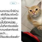 หนุ่มได้ทานข้าวฟรีไม่รู้ตัว เหตุเพราะใจดีแบ่งไก่ทอดให้แมวที่เข้ามาขออาหาร