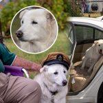 หมาถูกทิ้งอยู่ศูนย์พักพิงนาน จนเกือบถึงเส้นตาย แต่คุณตาวัย 93 ช่วยชีวิตมันไว้ได้ทัน!!