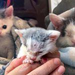พลเมืองดีช่วย 'ลูกแมวตาเดียว' ที่เอาตัวรอดโดยไม่มีแม่ มันจึงได้มีชีวิตใหม่แฮปปี้ที่สุด