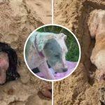สุนัขถูกฝังทั้งเป็นในกองทราย เรียนรู้ที่จะเชื่อใจมนุษย์อีกครั้ง หลังได้รับการช่วยเหลือ