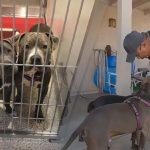 หมาจรจัด 2 ตัวถูกชะตากันในศูนย์ฯ จากนั้นมาพวกมันก็อยู่ด้วยกัน และถูกรับเลี้ยงด้วยกัน