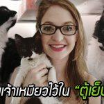 ทาสตกใจบังเอิญขังแมวไว้ในตู้เย็น ส่วนมันน่ะเหรอ นั่งตากลมเย็นราวกับไม่มีอะไรเกิดขึ้น