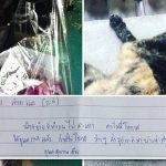 """เพื่อนห้องตรงข้ามผู้รักแมวต้องย้ายไปไกล ฝากโน๊ตถึงทาส """"ว่างๆ ส่งรูปแมวมาให้ด้วย"""""""