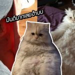 แมวชอบนอนซุกกางเกง ทาสเลยเอาใจ ด้วยการใส่กางเกงซ้อนให้มันนอนเล่นเต็มที่