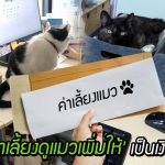 บริษัทสนับสนุนพนักงานทาสแมว 'โบนัสค่าเลี้ยงดูแมว' เพิ่มให้เป็นเงินพิเศษทุกเดือน
