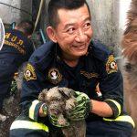 หมาตาบอดตัวน้อยตกท่อในเขตบางนา นักดับเพลิงจึงเข้าช่วยน้อง พาออกมาได้สำเร็จ!