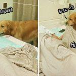 หมาดูแลเจ้าของดีมาก!! เห็นเจ้าของเผลอหลับไป เลยช่วยห่มผ้าและปิดไฟในห้องให้