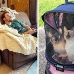 มาดู 20 ภาพที่อธิบายชีวิตประจำวัน ของทาสแมวกับเจ้าเหมียวได้เป็นอย่างดี