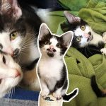 ลูกแมวน้อยได้เจอกับแมวจรอีกตัว ที่รับมันไปดูแลเหมือนเป็นพี่น้องคนละแม่