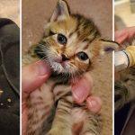 นักดนตรีพบลูกแมว 6 ตัว เพิ่งจะรู้ว่าซ่อนอยู่ใต้รถ หลังเดินทางข้ามเมืองมาเป็นเวลา 2 วัน