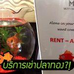 โรงแรมนี้มีบริการแหวก ให้ 'เช่าปลาทอง' ไปอยู่เป็นเพื่อน จะได้ไม่เหงาตอนเข้าพัก