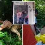 สุนัขหลงอยู่ในป่านาน 11 วัน ก่อนจะมีคนมาพบ และพามันกลับสู่อ้อมกอดครอบครัว