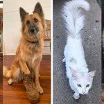 20 ภาพก่อนและหลังของหมา-แมว ที่ย้ำเตือนว่าทำไมเราถึงรักสัตว์เลี้ยงได้ขนาดนี้