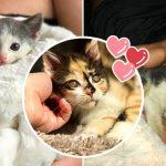 ครอบครัวช่วยลูกแมวออกจากที่จอดรถได้ทันเวลา ตามหาเพื่อนช่วยคลายเหงาให้อีก