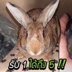 ครอบครัวรับเลี้ยงกระต่ายโดยไม่มีรู้ว่ามันมีความลับ จนวันที่ตื่นมาเจอลูกกระต่าย 5 ตัวในบ้าน